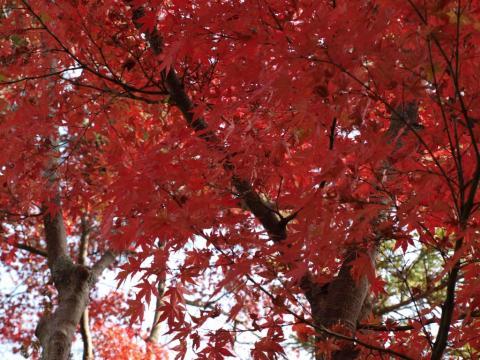 2009-10-11-17 027紅葉3