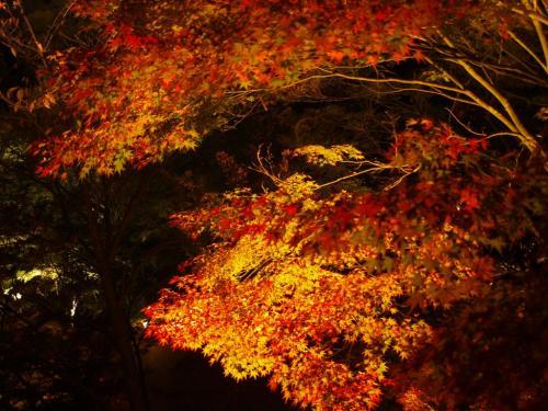 2009-10-11-17 361 清水寺3