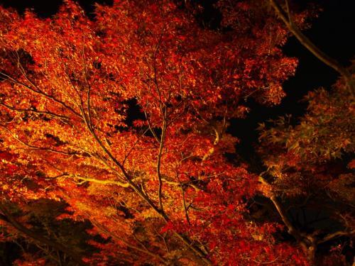 2009-10-11-17 359 清水寺2