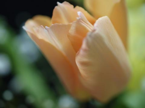 2010-01-25 016-2