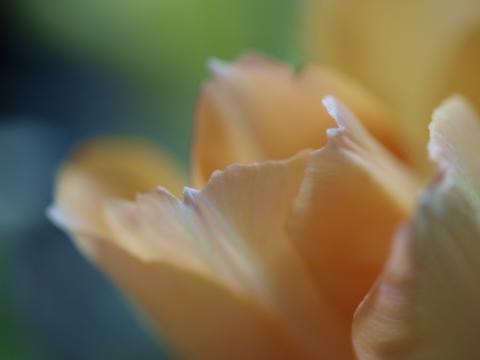 2010-01-25 008-2