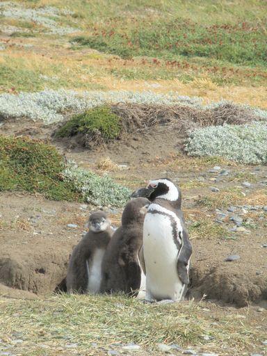 ヒナとペンギン