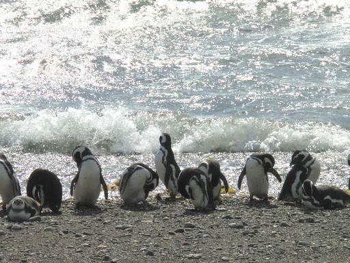 海辺のペンギン