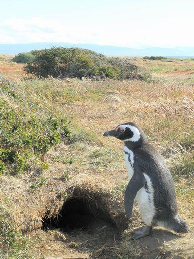 巣とペンギン