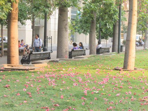 広場に散らばる花