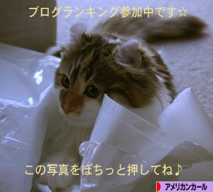 091108pochi.jpg