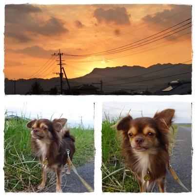 夕陽&ツナ