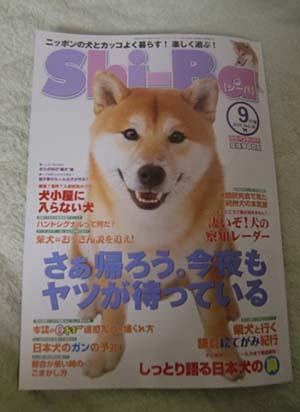 730shiba1.jpg
