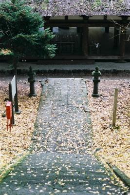 長床と大イチョウ(2009/11/19)@新宮熊野神社