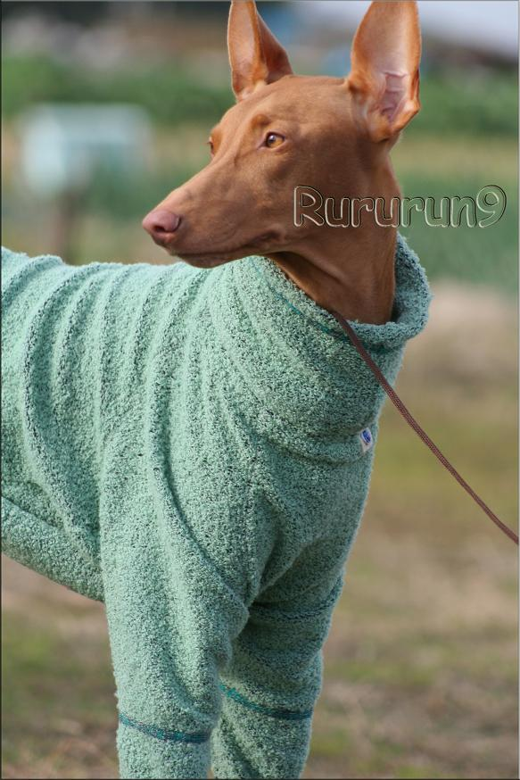 グリーンのセーター レミー