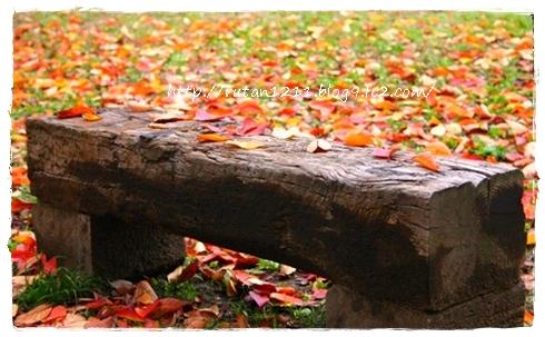 Autumn leaves10