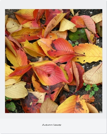 Autumn leaves1