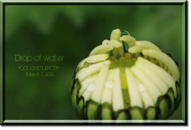Drop-of-waterつぼみ