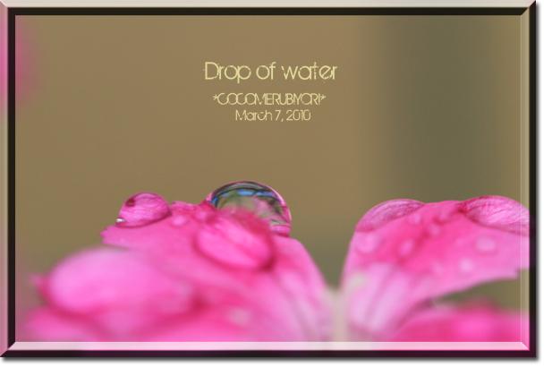 Drop-of-water-flower.jpg