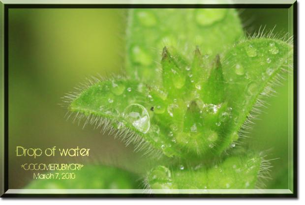 Drop-of-water1.jpg