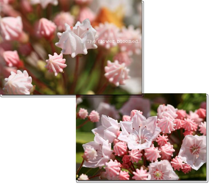 The-flower-bloomed.jpg