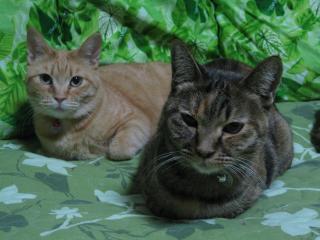 キララ&ダイアナ(ごん)