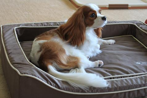 ペピィモデル犬 10