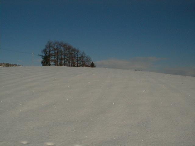 山の畑、冬