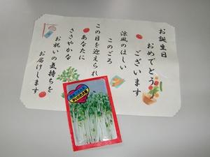 かいわれ大根の種1