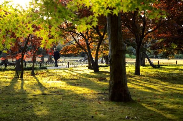 岡山県岡山市北区後楽園  岡山後楽園  千入の森