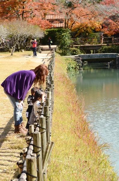 岡山県備前市閑谷  旧閑谷学校  紅葉の見頃は11月初旬