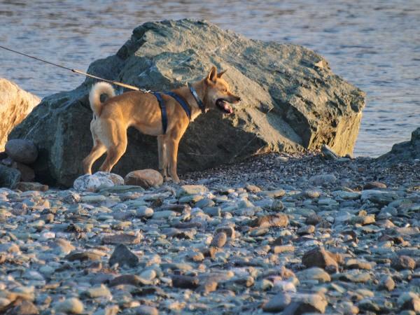 西条市古川 加茂川河川敷の犬