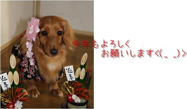 2009_12_30_06
