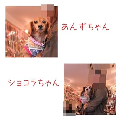 2011-01-15-05_20110214204538.jpg