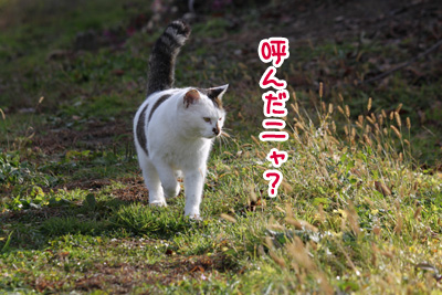 IMG_4925.jpg