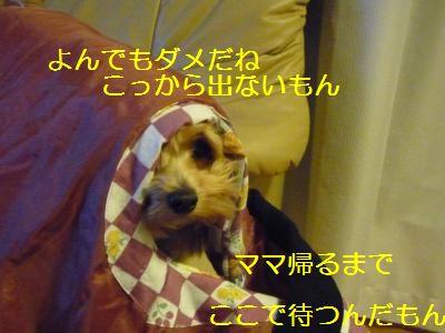 ピンクレディー3