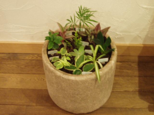 観葉植物寄せ植え