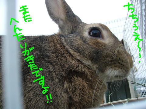09うさんぽ会アルさま(1)