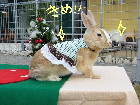 09うさんぽ会こむぎさま(1)
