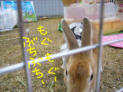 09うさんぽ会ふかひれ(2)