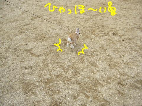 09うさんぽ会ふかひれ(5)