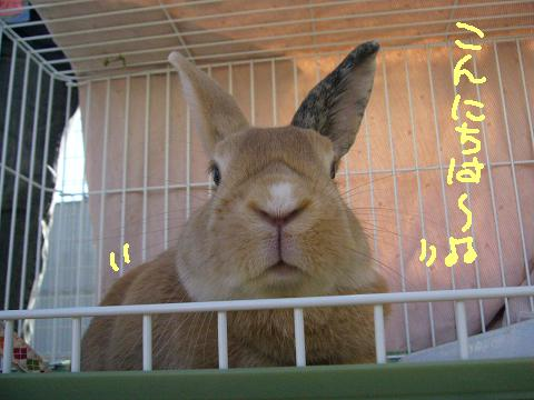10うさんぽ会ナツメ(1)