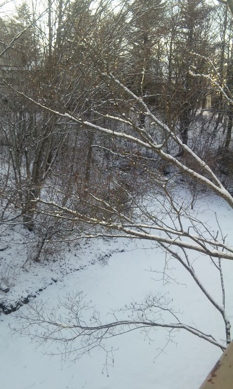100113_雪