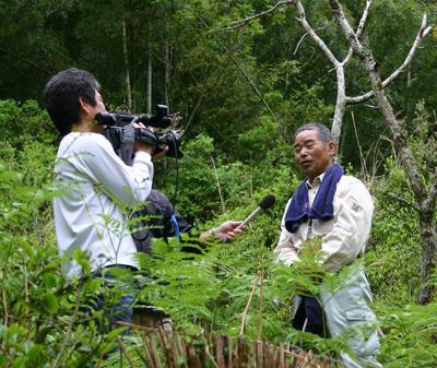 山茶摘み体験2011年110507o