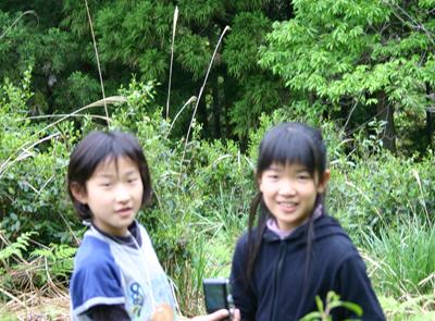 山茶摘み体験2011年110507p