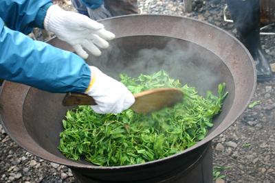 山茶摘み体験2011年 その2110508a
