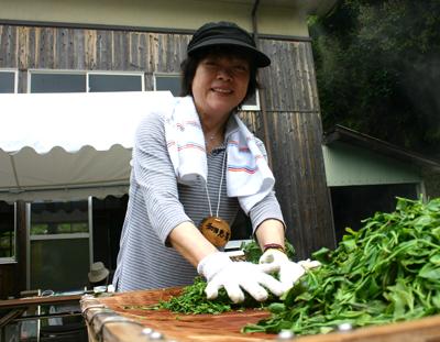 山茶摘み体験2011年 その2110508b