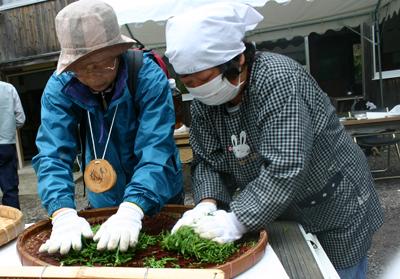 山茶摘み体験2011年 その2110508c