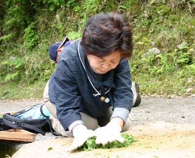 山茶摘み体験2011年 その2110508e