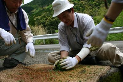 山茶摘み体験2011年 その2110508f