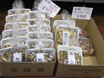 091222売店椎茸mage