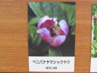 3IMG_1439.jpg