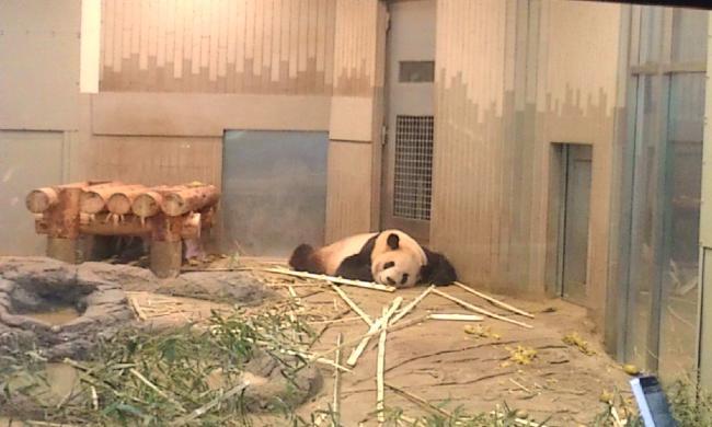 20110519_上野動物園-006