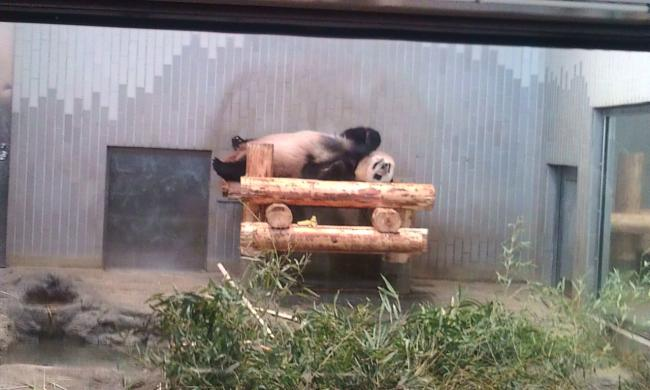 20110519_上野動物園-004
