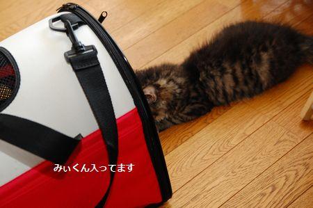 20130727meichan2.jpg